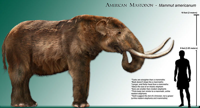 North American Mastodon